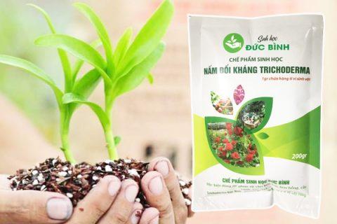 Bí quyết sử dụng chế phẩm trichoderma cho lan và hoa hồng hiệu quả