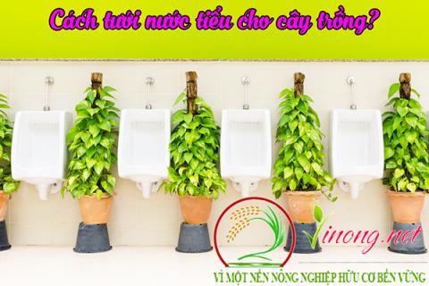 Cách tưới nước tiểu cho cây hiệu quả nhất?