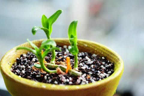 Cách làm chế phẩm EM tỏi rất đơn giản, dễ thực hiện và có tác dụng phòng trị bệnh cho vật nuôi và cây trồng
