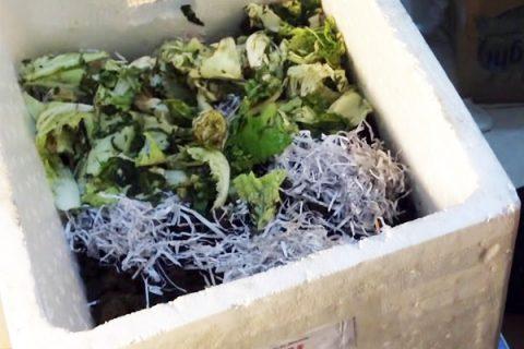 Cách nuôi trùn quế trong thùng xốp