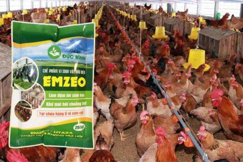 Lưu ý sử dụng chế phẩm khử mùi hôi chuồng trại Emzeo theo hướng dẫn ghi trên bao bì.