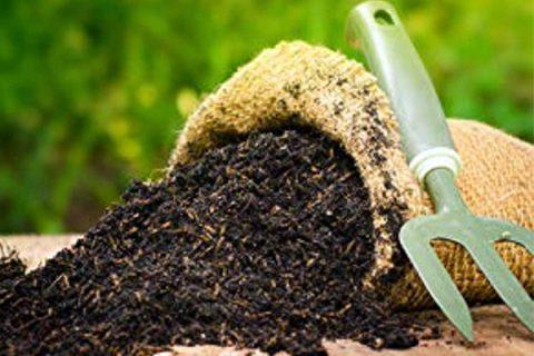 Phân chuồng là một trong những nguồn phân hữu cơ cực kỳ phổ biến và hữu ích