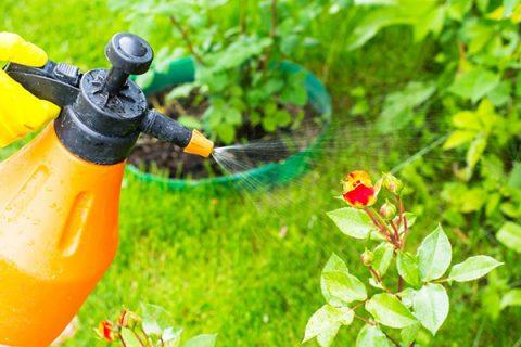 Sử dụng thuốc trừ sâu sinh học thảo dược an toàn với cây trồng, con người và môi trường