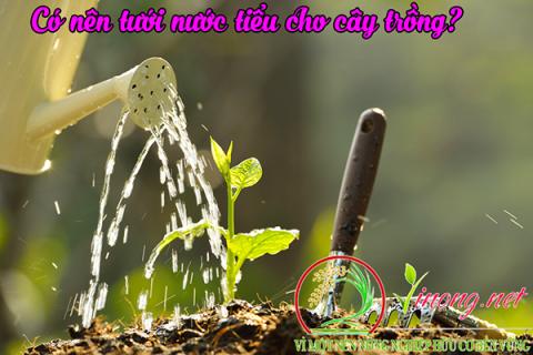 Nước tiểu sau khi xử lý tưới cho rau và cây trồng rất tốt