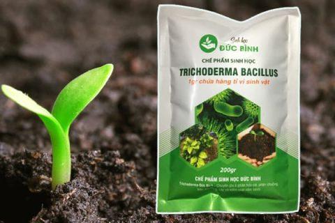 Trichoderma Bacillus hỗ trợ cải thiện đất tươi xốp