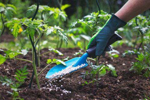 Cách nhận biết rau thiếu hoặc thừa đạm