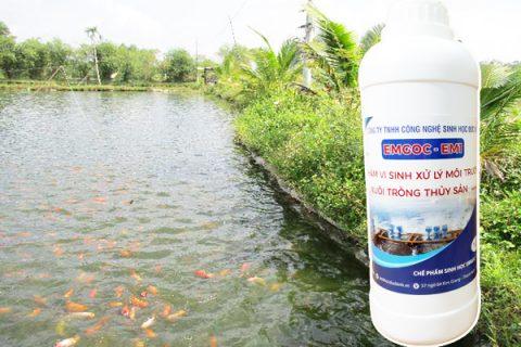 Cách nuôi cá nước ngọt bằng chế phẩm sinh học đơn giản cho hiệu quả cao