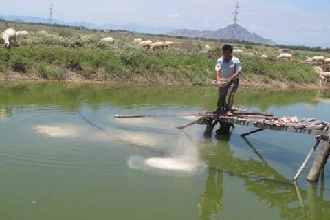 Cơ chế hoạt động của chế phẩm sinh học trong quá trình ứng dụng nuôi trồng thủy sản là gì?