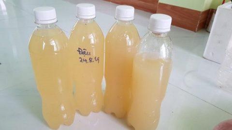 Không sử dụng bình thủy tinh để đựng GE đậu nành, chỉ có thể dùng bình nhựa.