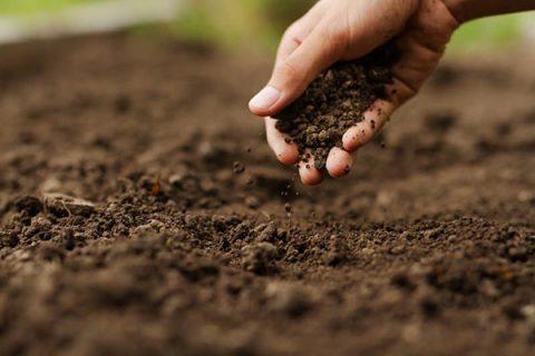 Phân bón dầu ủ bằng chế phẩm sinh học có tác dụng cải tạo đất, kích thích cây trồng phát triển mạnh